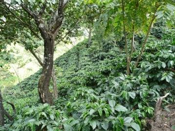 Plantasen hill